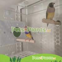 Kandang Burung Akrilik Kenari Love Bird Parkit Crystal Clear Import