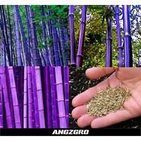 Benih Bambu Purple China 10 seeds