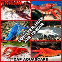 lobster air tawar aquarium aquascape / lobster hias air twar
