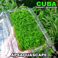 tanaman aquascape cuba callitrichoides / karpet akuarium per mika