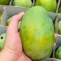 Grosir Mangga Harum Manis 1 Box (10 Kg)