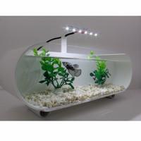 Aquarium mini acrylic ikan cupang unik murah