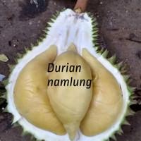 Bibit buah durian namlung asli kaki 3
