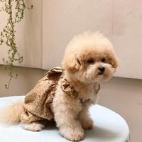 baju anjing jumpsuit hewan flower bloom in brown ( free pita / brooch