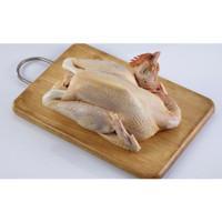 Ayam Kampung Utuh Mentah Hidup Potong - 1 Ekor