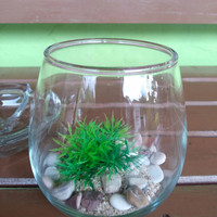 gelas kaca citinova tuscany 475 ml - Aquarium mini ikan cupang
