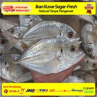 Ikan Kuwe Kue Segar Fresh / Kuwe Lilin Bobara / Ikan Bakar Kuwe