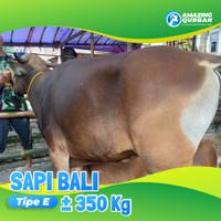 SAPI BALI QURBAN TERMURAH 350KG SEJABODETABEK FREE TITIP DAN ONGKIR