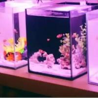 Lampu Aquarium 40cm WARNA MERAH (PINK) / Lampu celup akuarium