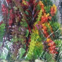 Tanaman Hias untuk Aquarium 20cm