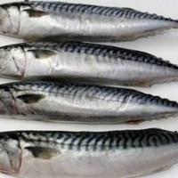 Ikan Salem Segar ½kg