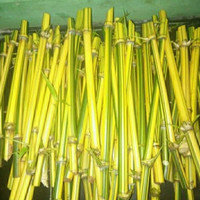 Bambu kuning, Stek/bibit bambu kuning Penangkal jin/setan