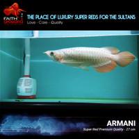 Ikan Arowana Super Red Semi Short Body kualitas Premium