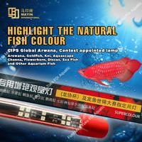 Lampu LED View MAYIN Aquarium ikan Arowana / Arwana