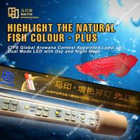 Lampu LED MAYIN PLUS Aquarium ikan Arowana / Arwana
