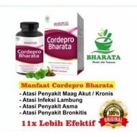 Obat Herbal Magh Cronis - Asam Lambung - Infeksi Lambung / Cordepro