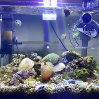 aquarium air laut 1 set (40x25x23)