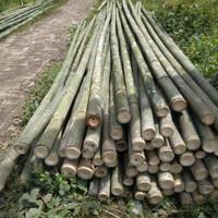 bambu steger 7/8