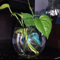 aquarium mini hias ikan cupang 475ml kaca/ vas Bunga kaca Bening Hias