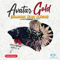 PROMO   Bahanan Ikan Cupang Avatar Cooper Gold, Kuncop, Gordon.