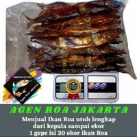 Ikan roa / Ikan roa utuh 1 gepe isi 20 ekor / Roa asap / Roa