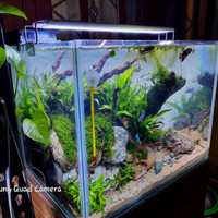 aquarium aquascape full set-40x30x30 cm hemat dan lengkap