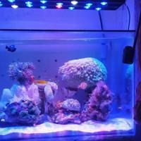 lampu aquarium hpl air laut 60cm 18watt full lensa