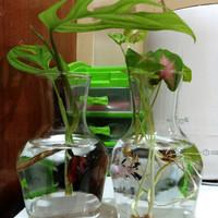 Aquarium Cupang Mini Ukuran 570ml Akuarium Kecil Kaca Botol Ikan Hi