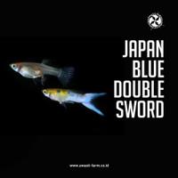 ikan guppy japan blue double sword.