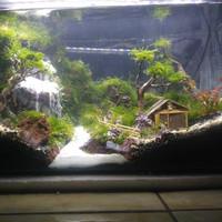 Aquarium aquascape waterfall fullset 50cm murah meriah