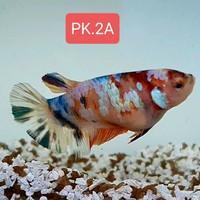 Murah Berkualitas, Female Multicolor, Size L (ORDER 3 DAPAT 5 EKOR)