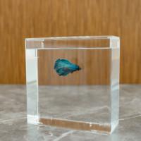 ENOS AKVA Type B Aquarium / Akuarium / Soliter Ikan Cupang Akrilik