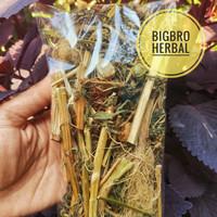 Ciplukan kering murah | pohon ciplukan cecendet | obat herbal diabetes