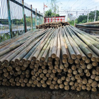 Bambu Steger Dak Cor Beton ukuran diameter 8-9-10cm. panjang 6 meter