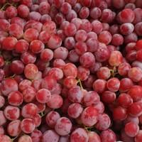 Buah Anggur Red Globe Grapes Fresh - 500 gram