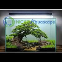 NICKZ Aquascape Natural Bonsai Full Set Tank 60