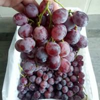 Anggur Red Globe Rrc 1 Keranjang Fresh