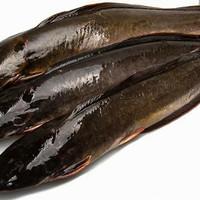 Ikan Lele Segar 1 kg