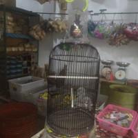 sangkar lovebird ebod decal