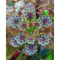 benih biji impor bunga jonquil bloming mix indah di pandang