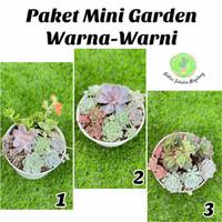 Mini Garden Sukulen Warna-warni