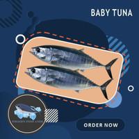 Ikan baby tuna /tongkol abu-abu beku