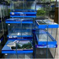 Aquarium Bending Kandila 60cm x 30cm x 36 cm