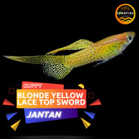 Ikan Guppy Blonde Yellow Lace Top Sword