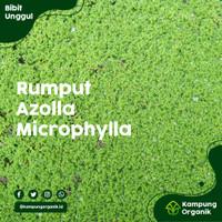Bibit Rumput Azolla microphylla