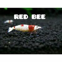 red bee aquascape