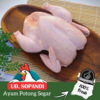 Ayam potong segar karkas montok per kg