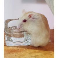 Peralatan Makan Mangkok Botol Tempat Air Minum Water Bowl Kaca Hamster
