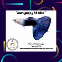 hiasan aquarium ikan guppy hb blue murah