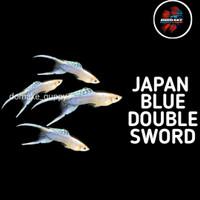 ikan guppy japan blue double sword
